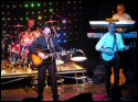 The Hollywood Bees Hollies Tribute